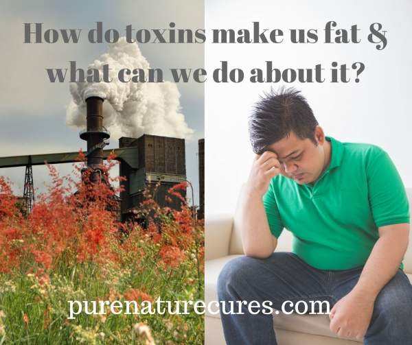 How toxins make us fat and what to do about it