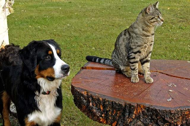 Food supplements for cats and dogs